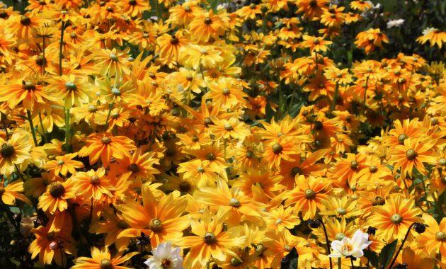 The secret of the golden flower, C.Jung at AnAccidentalAnarchist.com