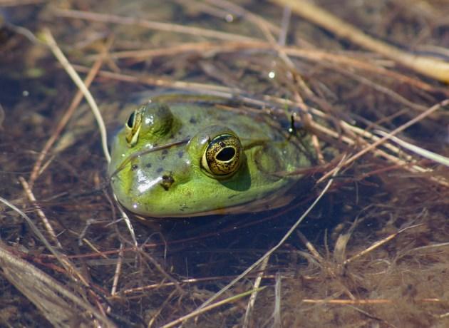 Frog & Scorpion - AnAccidentalAnarchist.com