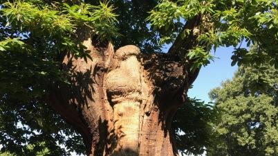 Trees and life - anAccidentalAnarchistblog.wordpress.com